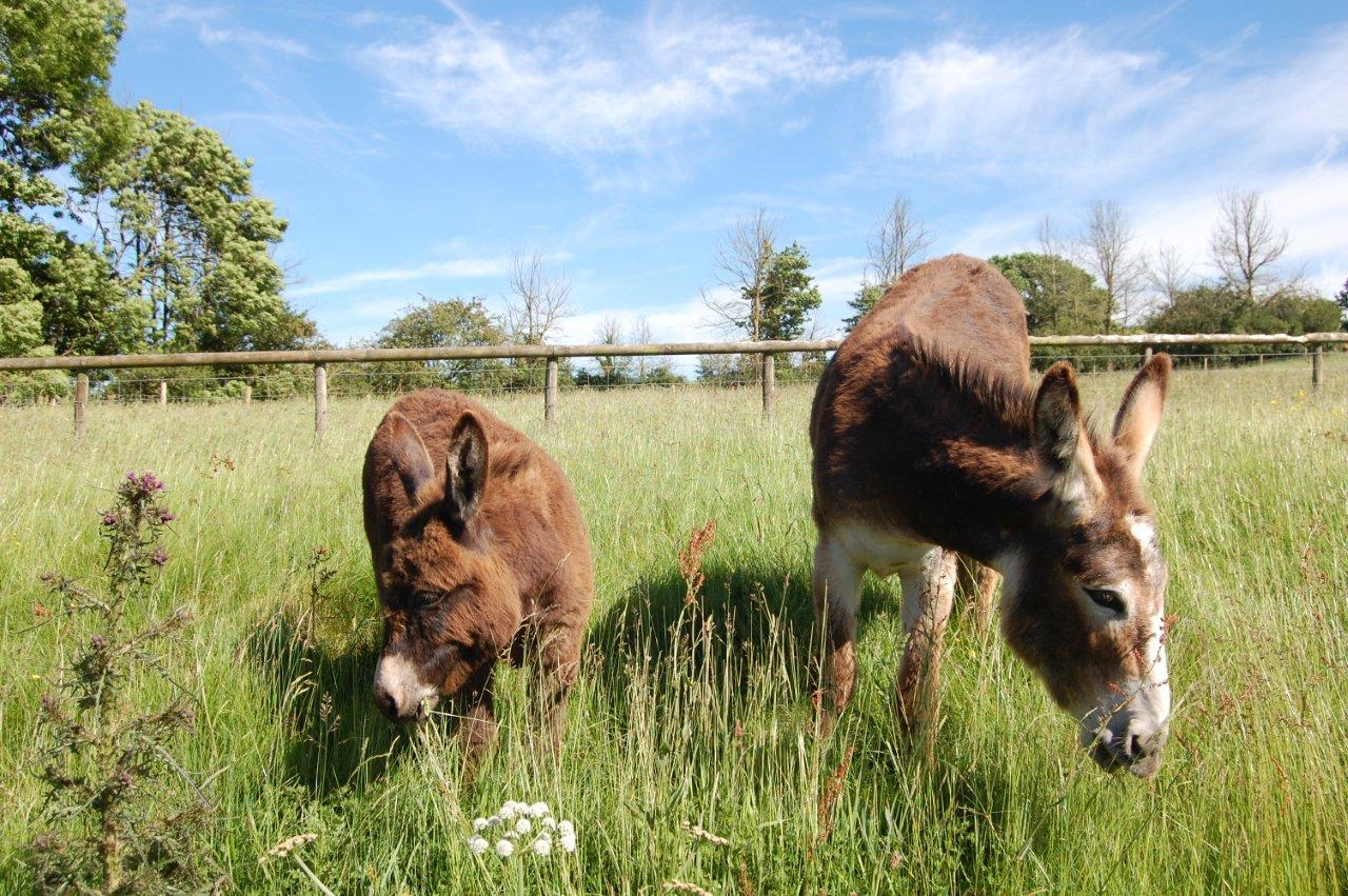 Farm Donkeys