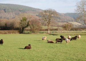 Views of surrounding fields