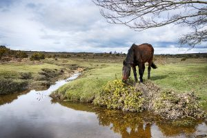 Explore Exmoor - Things to do and see