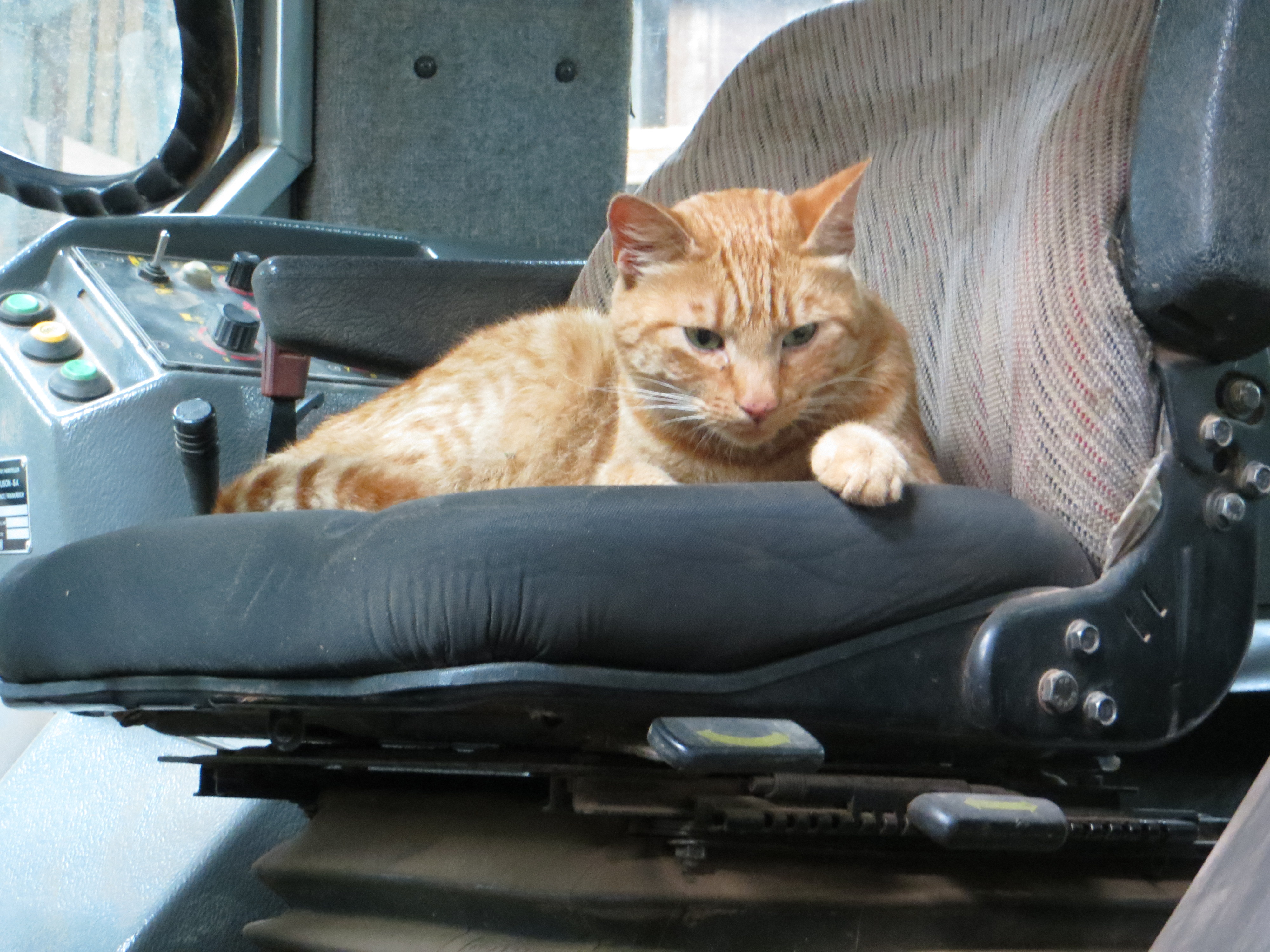Cat in a Tractor